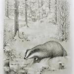 Hibernal Badger